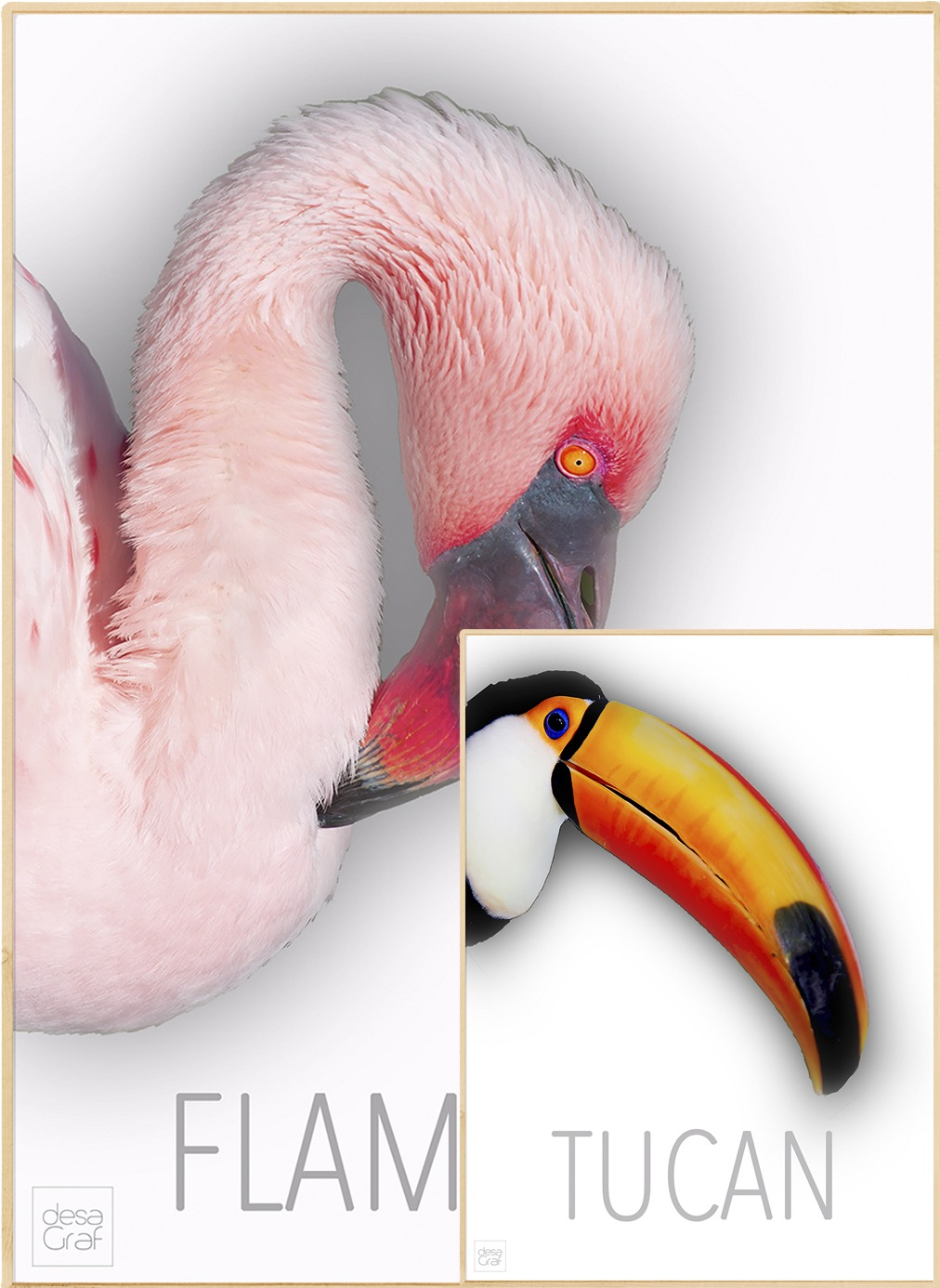 Image of   Flamingo/Tucan pakketilbud